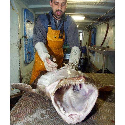 十大恐怖海洋生物:大乌贼体长可达20米(图)