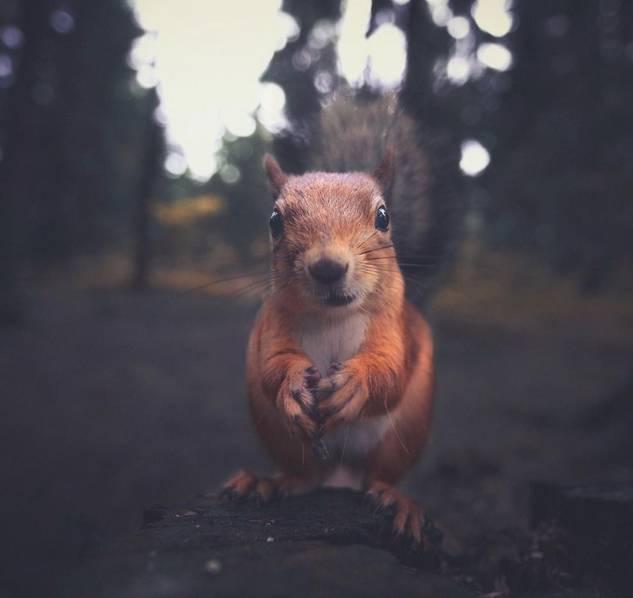 北欧森林的野生动物