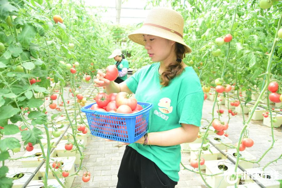 建德:無土栽培 綠色蔬菜